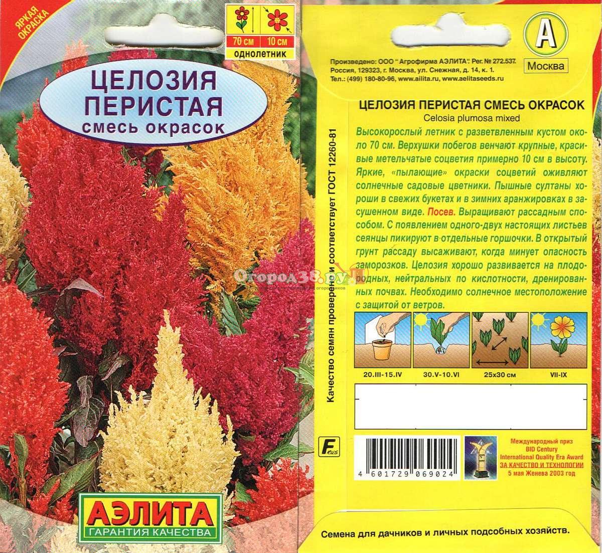 Целозия перистая выращивание из семян фото