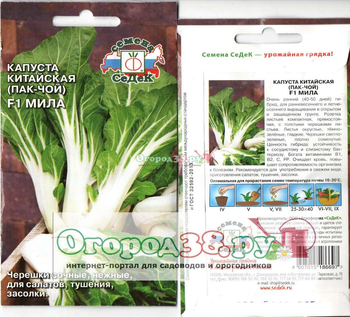 Выращивание капусты пак чой в открытом грунте 48