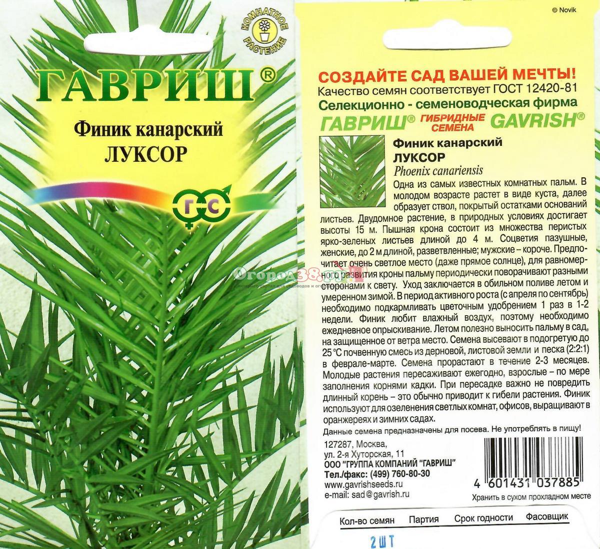Как сажать финик канарский из магазинных семян 27