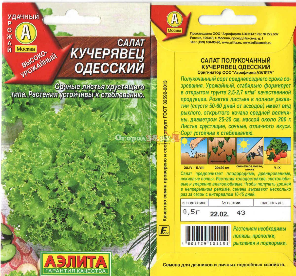 Салат кучерявец одесский выращивание из семян 84